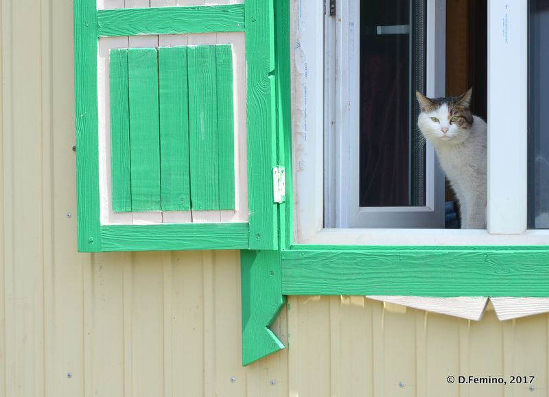 Cat at the window (Ivolginsky Datsan, Russia, 2017)