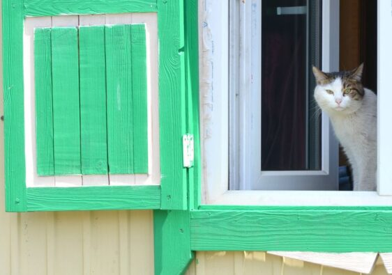 Cat at the window in Ivolginsky Datsan