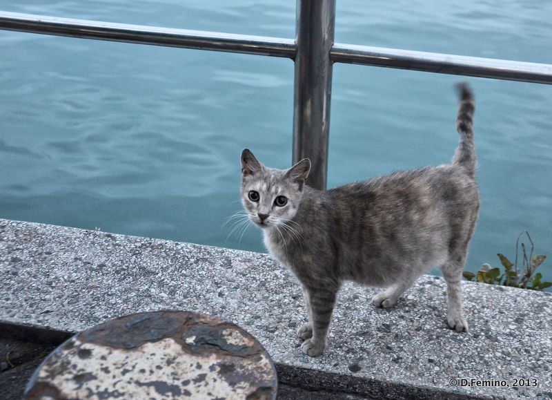 Cat by the sea (Batumi, Georgia, 2013)