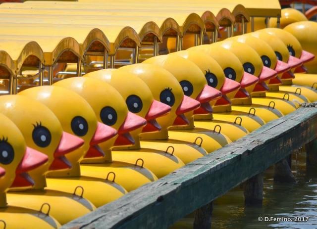 Ducks boat aligned (Beijing, China, 2017)