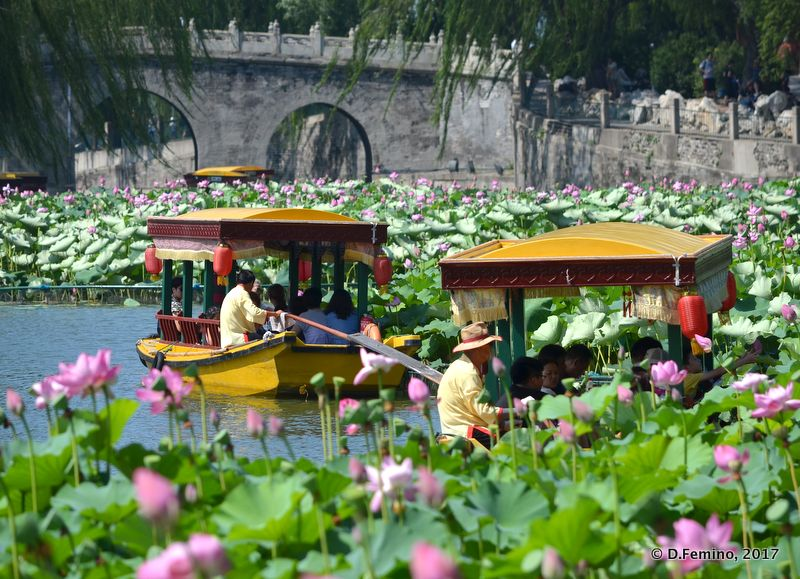 Boats lost among lotus flowers (Beijing, China, 2017)