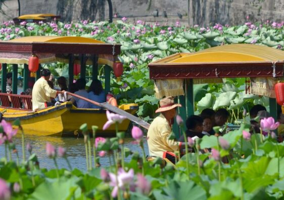 Boats and lotus flowers in Round city