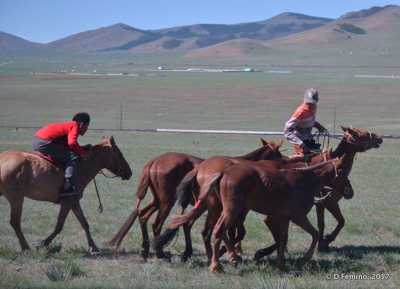 Moving horses (Terelj Park, Mongolia, 2017)