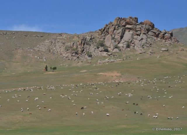 Mongolian landscape (Terelj Park, Mongolia, 2017)