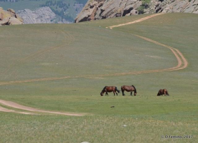 Horses in the field (Terelj Park, Mongolia, 2017)