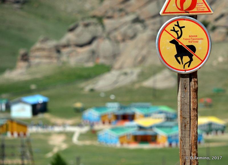 No animals with horns (Terelj Park, Mongolia, 2017)