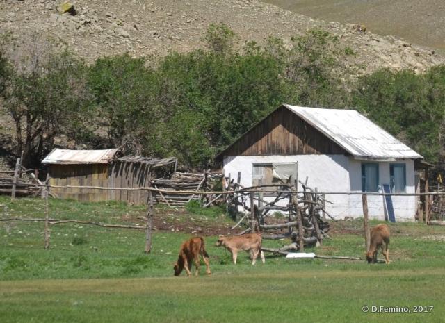 Small house and animals (Terelj Park, Mongolia, 2017)