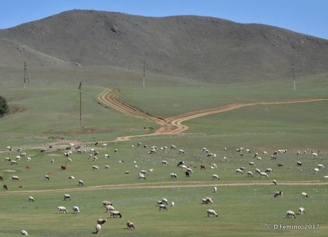 Cattle on the field (Terelj Park, Mongolia, 2017)