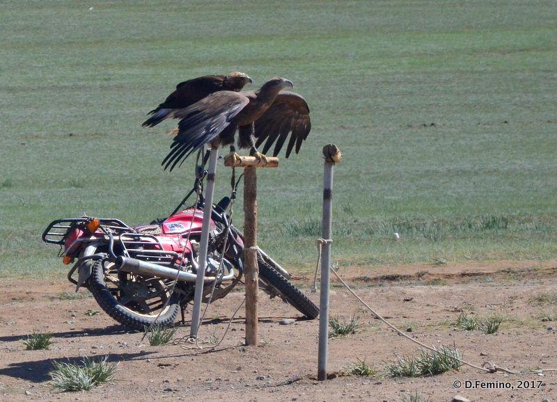 Eagle and motorbike (Terelj Park, Mongolia, 2017)