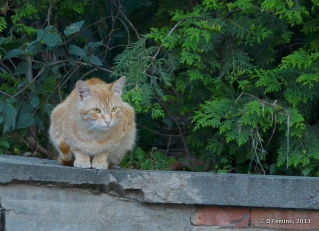 Cat on a wall (Tbilisi, Georgia, 2013)