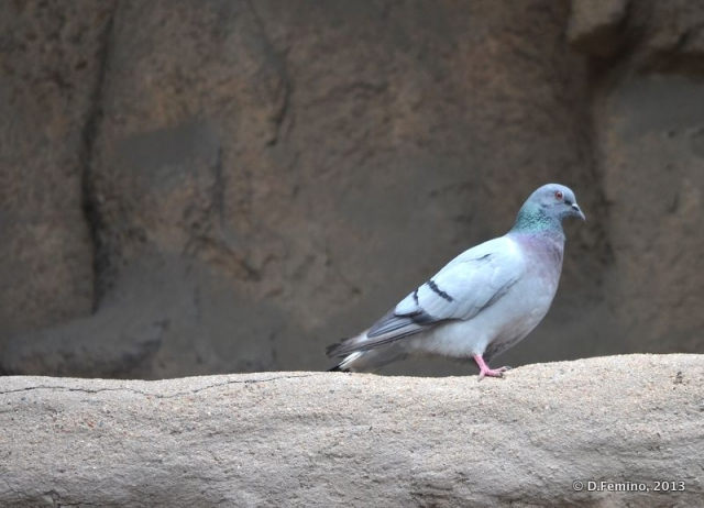 Pigeon in the cave (Yungang Grottoes, China, 2017)