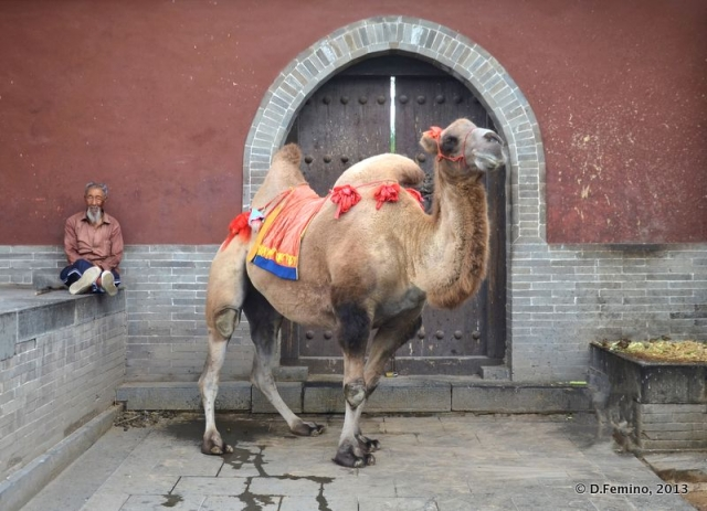 Fantastic corner with camel (Yungang Grottoes, China, 2017)