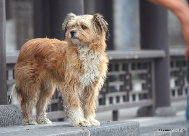 Dog by a temple (Datong, China, 2017)