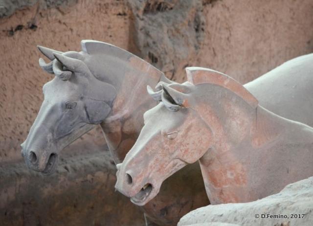 Horse heads (Xian, China, 2017)