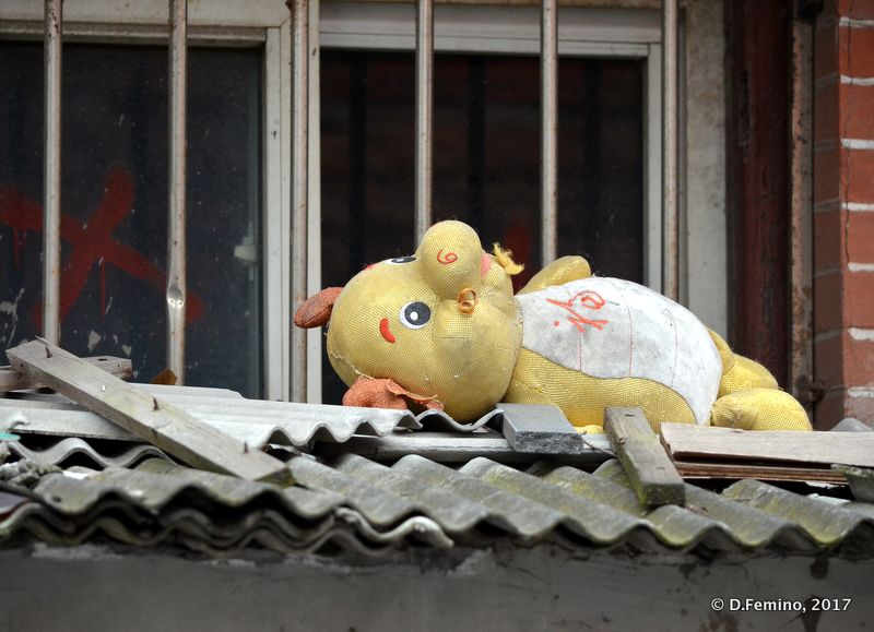 Abandoned teddy bear (Shanghai, China 2017)