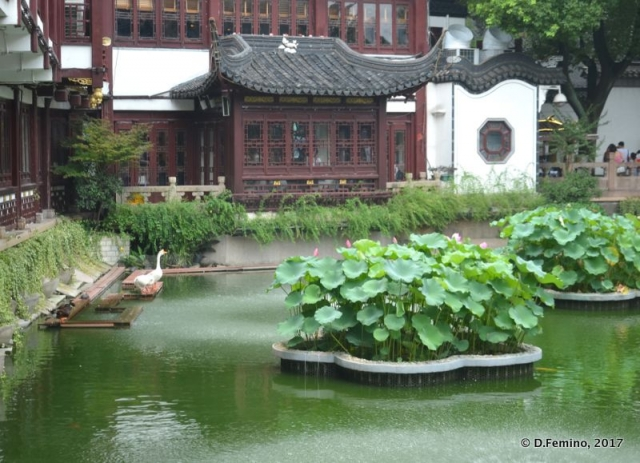 Yuyuan garden's glimpse (Shanghai, China 2017)