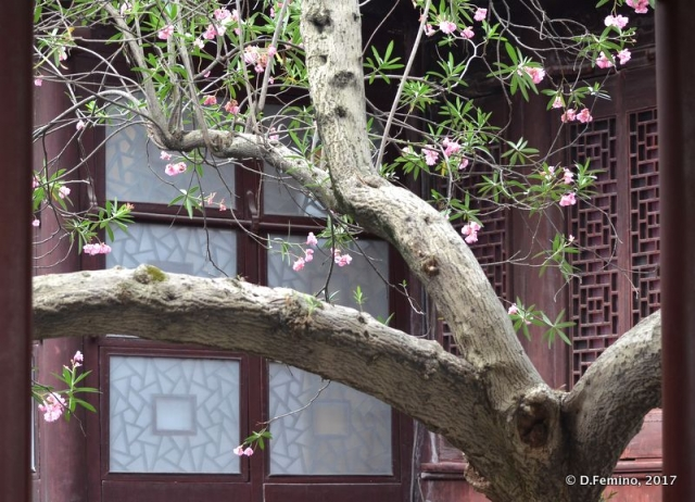Blossoms on a tree (Shanghai, China 2017)