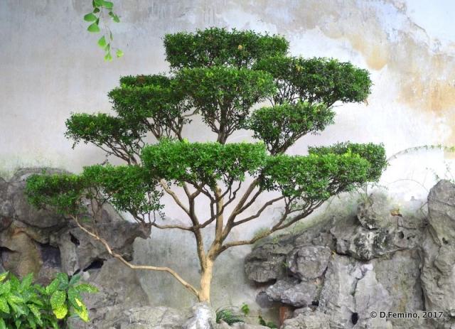 Bamboo tree (Shanghai, China 2017)