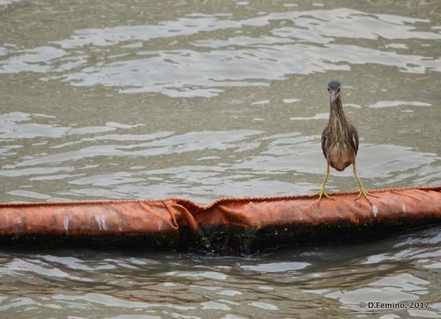 Bird on a floating belt (Shanghai, China 2017)