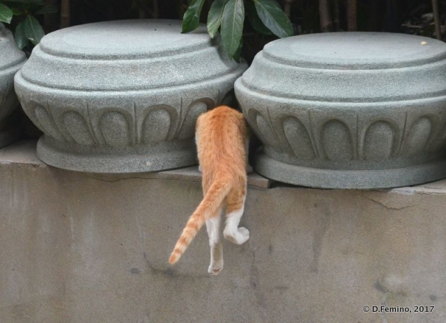 A cat butt among the vases (Shanghai, China 2017)