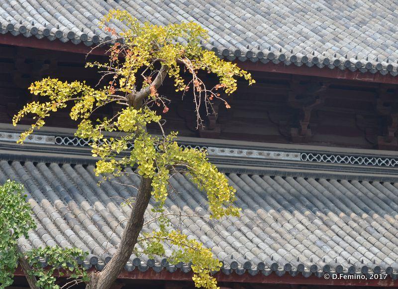 Tree and roof (Suzhou, China, 2017)