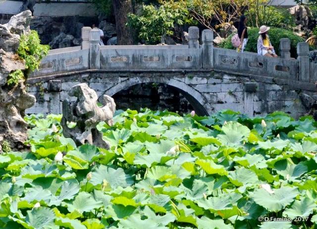 Lotus flower field (Suzhou, China, 2017)