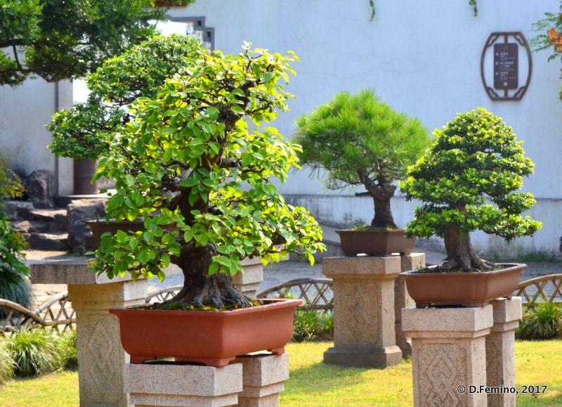 Bonsai trees (Suzhou, China, 2017)