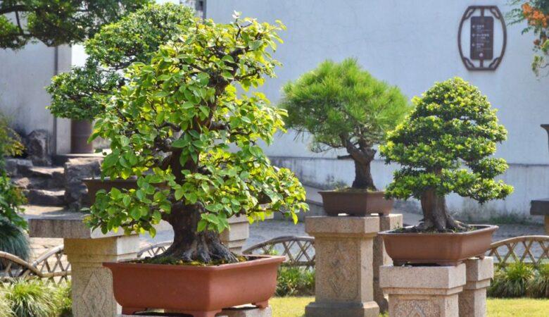 Nice bonsais in master of the net garden in Suzhou