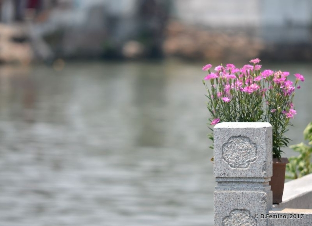 Flower by the river (Suzhou, China, 2017)