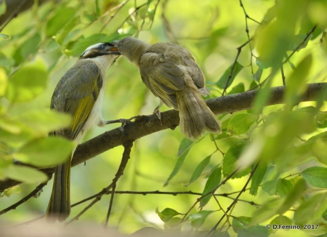The sparrow kiss (Suzhou, China, 2017)