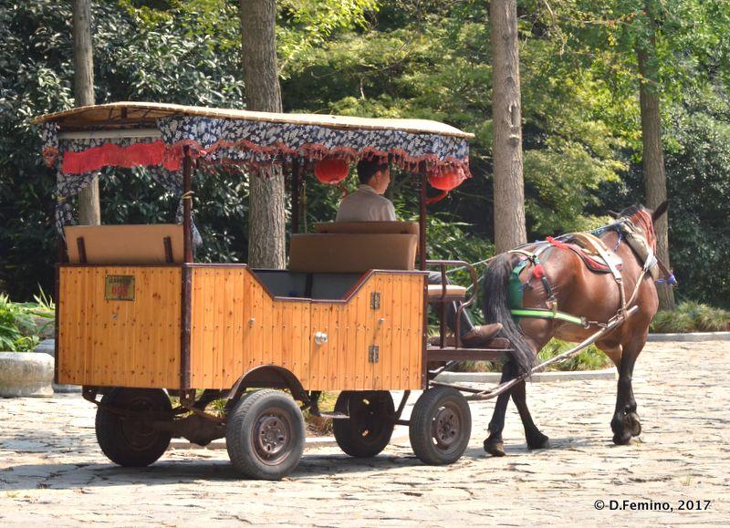 Horse cart (Suzhou, China, 2017)