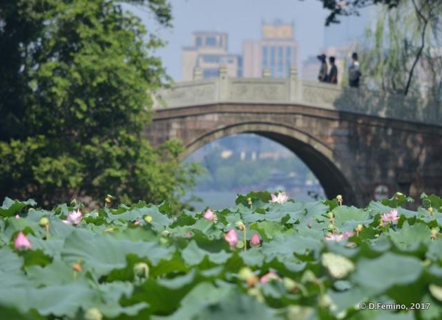 Bridge over lotus flowers (Hangzhou, China, 2017)