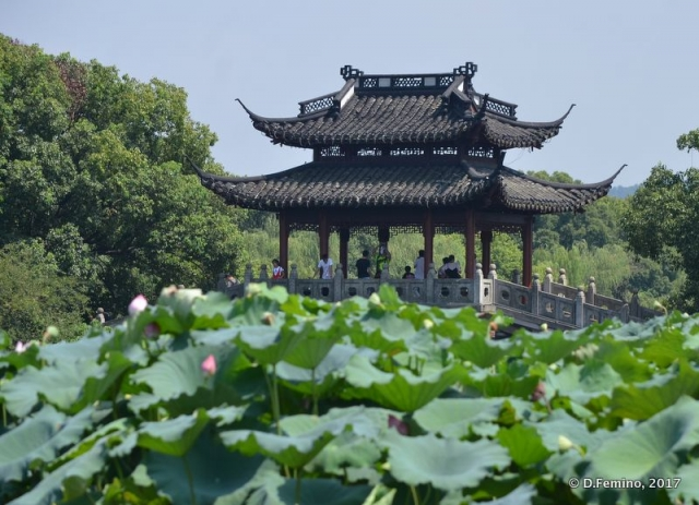 Pavilion in the green (Hangzhou, China, 2017)