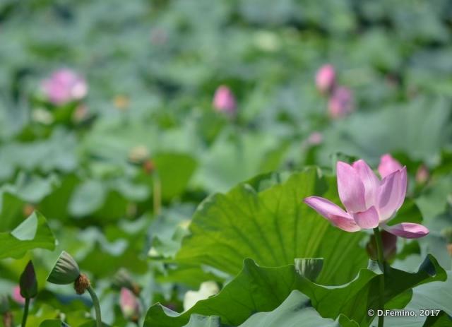 Flowers (Hangzhou, China, 2017)