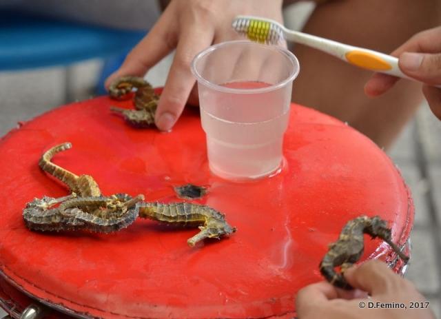 Cleansing seahorse (Guangzhou, China, 2017)