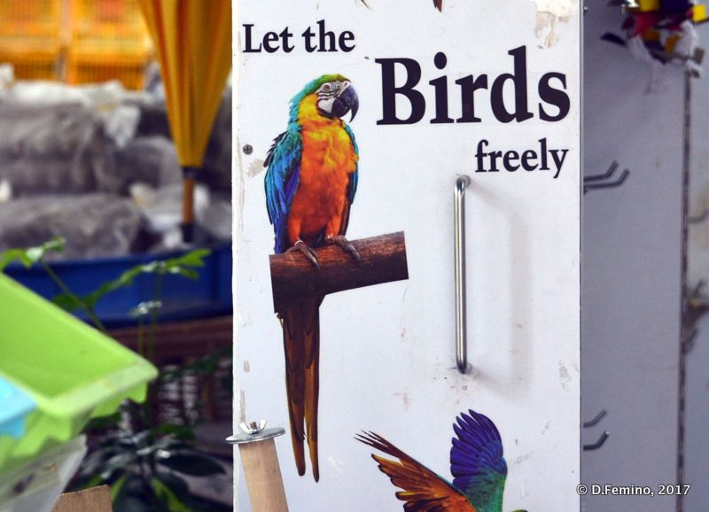 Quite a bizarre sign in bird market (Hong Kong, 2017)