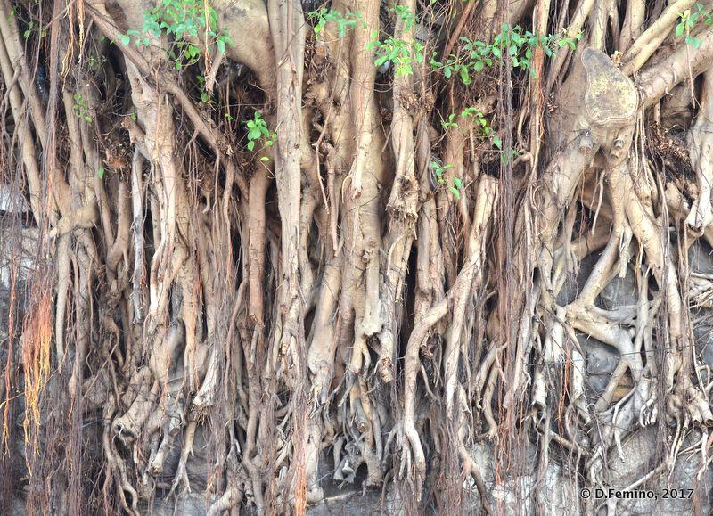 Roots (Hong Kong, 2017)