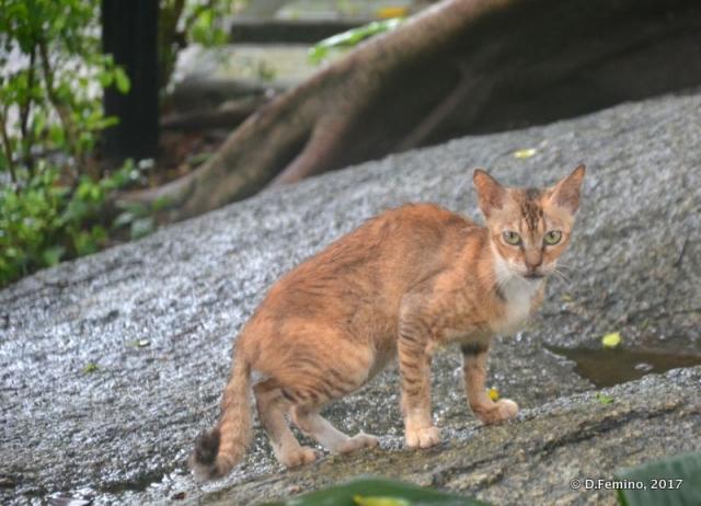 Skinny cat (Macau, 2017)