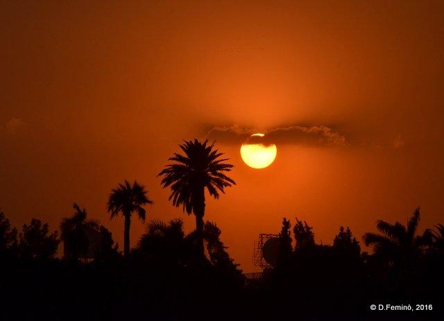Palms and sunset (Cairo, Egypt, 2016)
