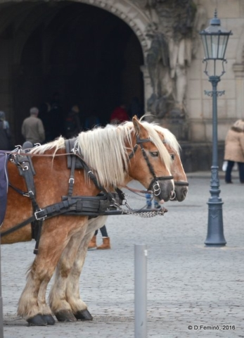 Carriage horses (Dresden, Germany, 2016)
