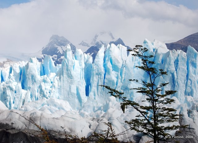 Tree, glacier, mountains (Perito Moreno, Argentina, 2009)