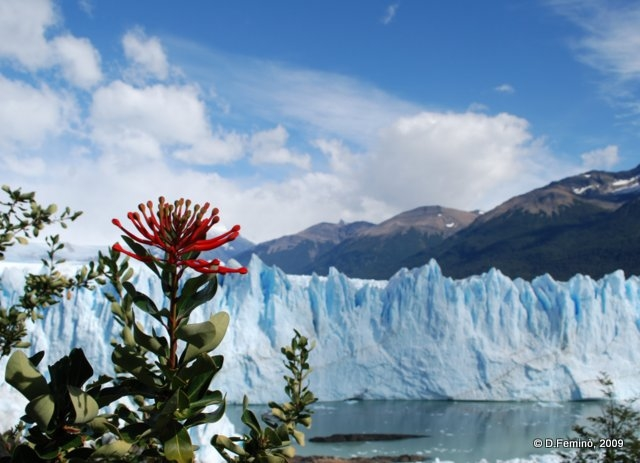 Flower on ice (Perito Moreno, Argentina, 2009)