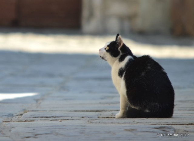 Thoughtful Cat (Krk, Croatia, 2017)