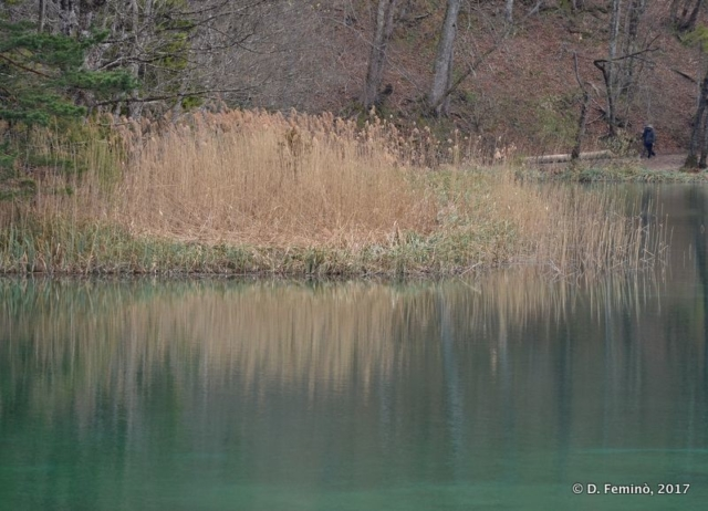 Reflection in the lake (Plitvice, Croatia, 2017)
