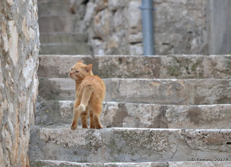 Upset cat (Korčula, Croatia, 2017)