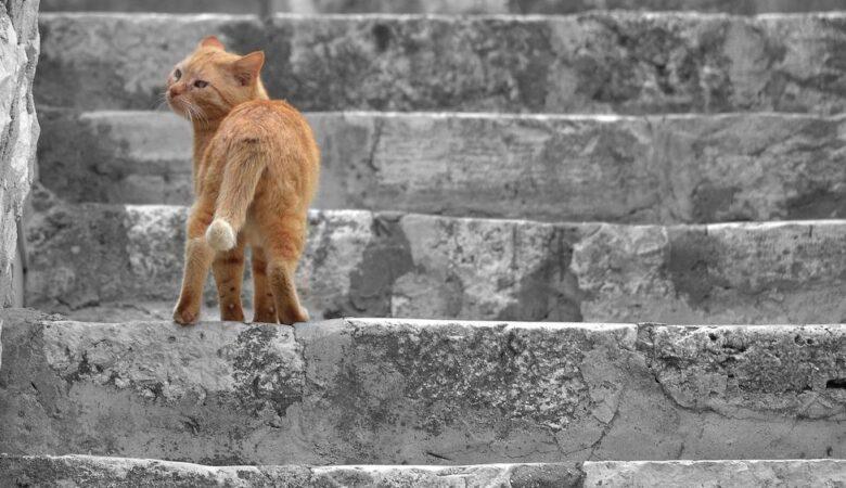 Cat in Korčula