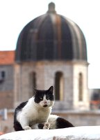 Cat and dome in Dubrovnik