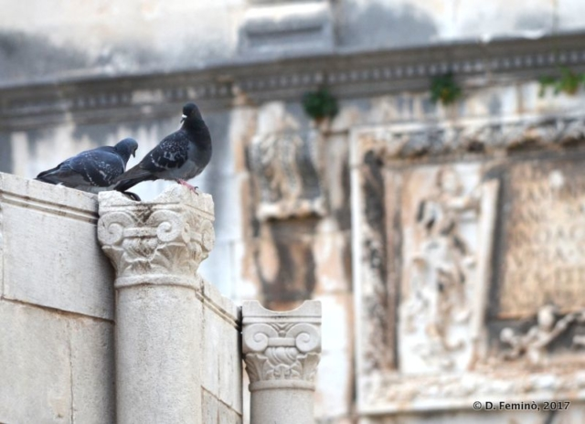 Pigeons in the old town (Dubrovnik, Croatia, 2017)